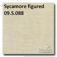 Sycamore figured 09.S.088