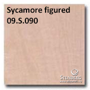 Sycamore figured 09.S.090